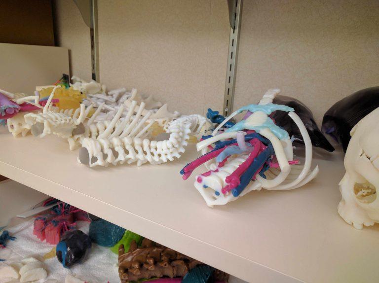modèles anatomiques imprimés en 3D
